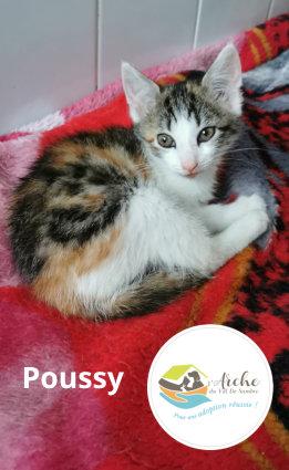 Poussy