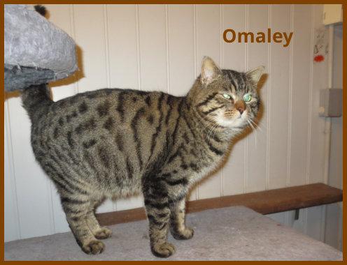 Omaley